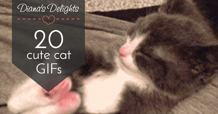 20 Cat GIFs Guaranteed to Make You Smile